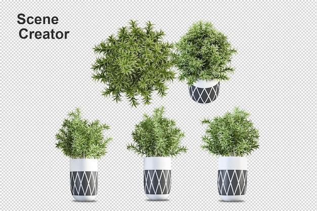 Progettazione di fiori in rendering 3d isolato