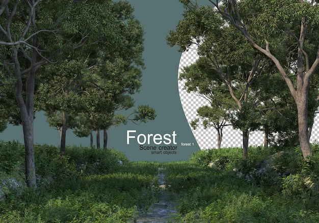 Foresta con vari tipi di alberi