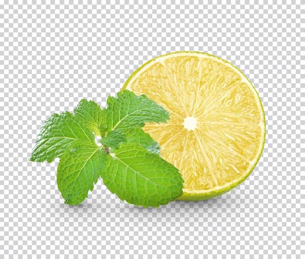 Calce fresca affettata con foglie di menta isolate
