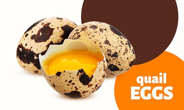 Uova di quaglia fresche isolate su fondo bianco
