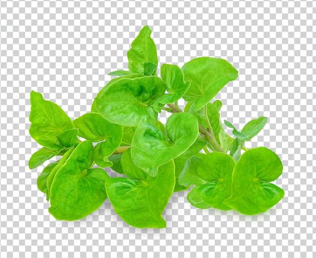 Crescione fresco isolato psd premium