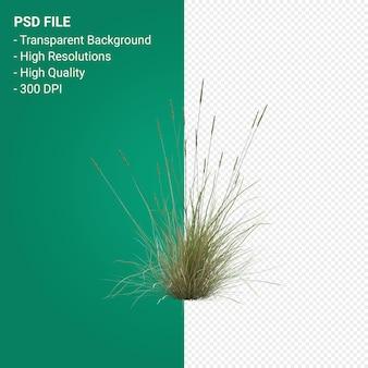 Rendering 3d dell'albero dell'erba isolato su sfondo trasparente