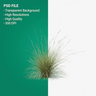 Rendering 3d di erba albero isolato