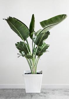 Mockup di design per la decorazione di piante verdi
