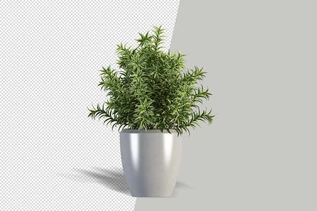 Pianta isolata in vaso