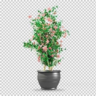 Piante isometriche nella rappresentazione 3d del vaso