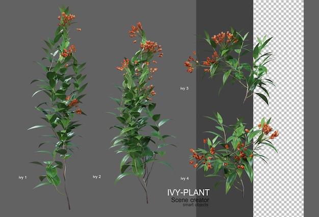 L'edera ha una grande varietà di fiori