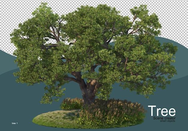 Un grande albero in mezzo al campo
