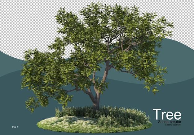 Un grande albero in mezzo al campo Psd Premium