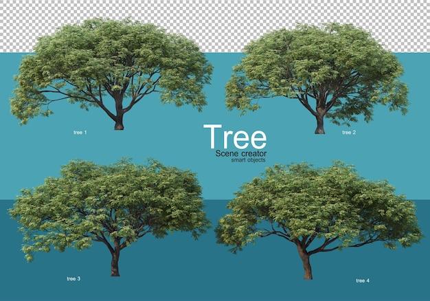 Grandi alberi di varie forme