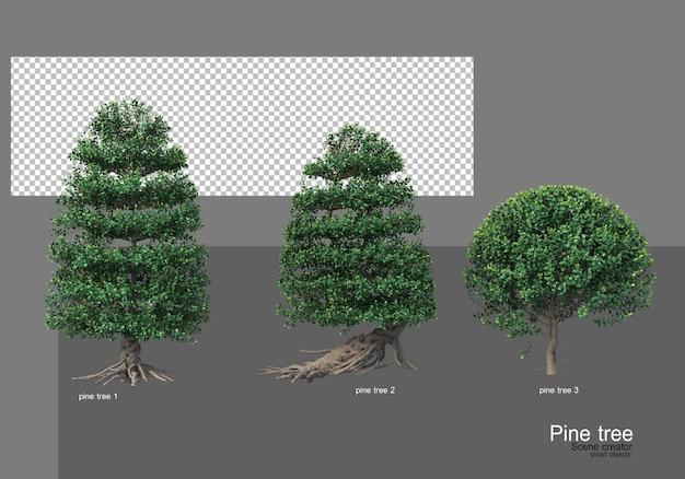 Molti diversi tipi di giardini di pini