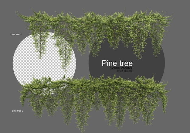 Molti diversi tipi di pini