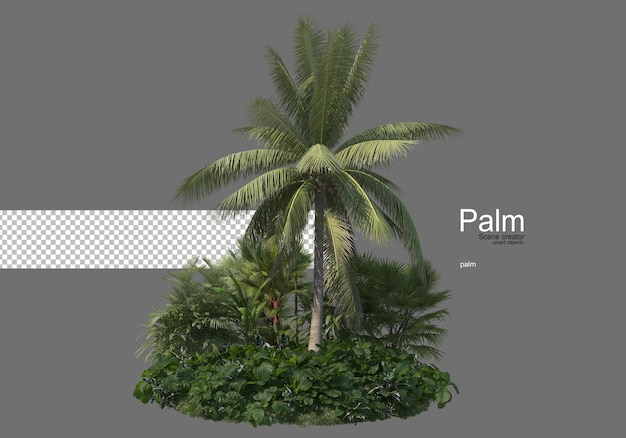 Molti tipi di palme