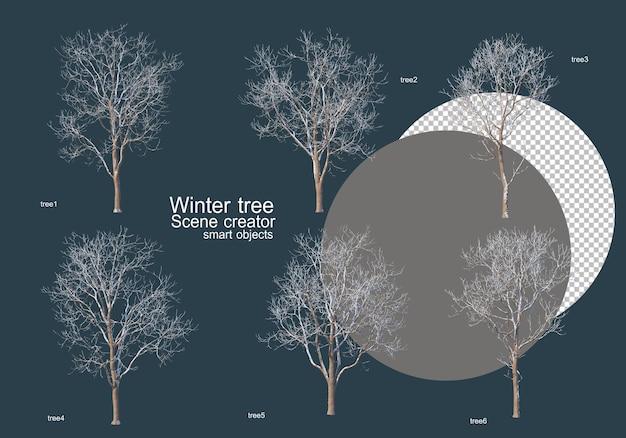 Molti tipi di alberi in inverno