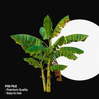 Musa paradisica o banana tree 3d rendering isolato