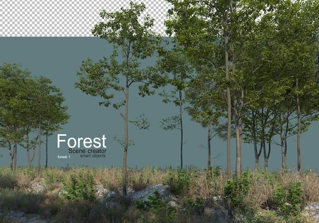 La natura del bosco con vari tipi di alberi e arbusti