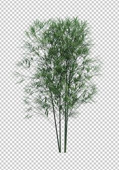 Oggetto natura. albero di bambù isolato