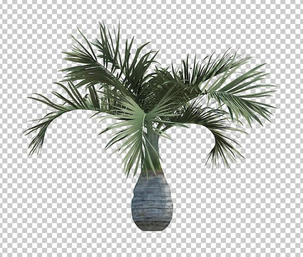 Bianco isolato palma dell'oggetto della natura