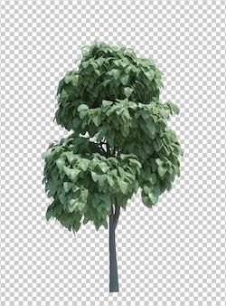 Natura oggetto albero isolato