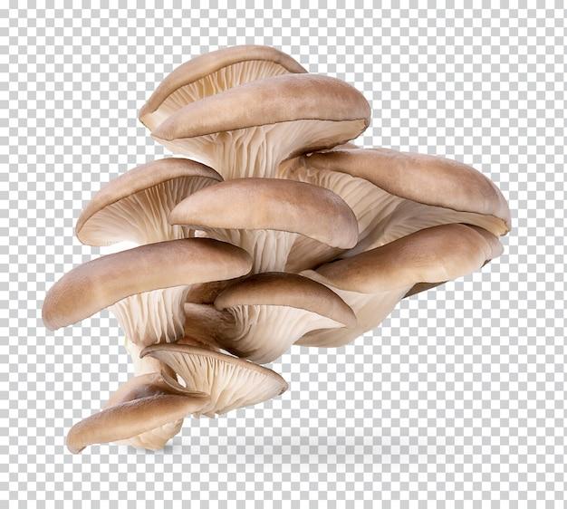 Fungo di ostrica isolato psd premium