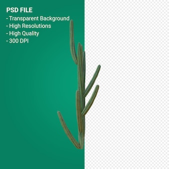 Pachycereus schottii 3d render isolato su sfondo trasparente