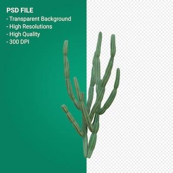 Pachycereus schottii 3d render isolato