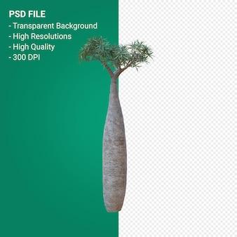 Pachypodium geayi 3d render isolato su sfondo trasparente