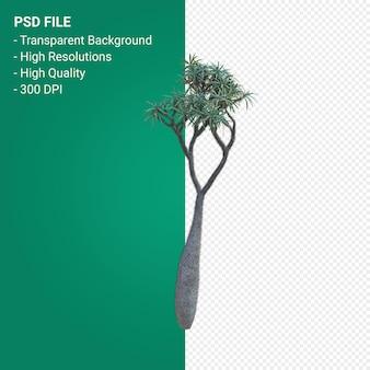 Pachypodium geayi rendering 3d isolato