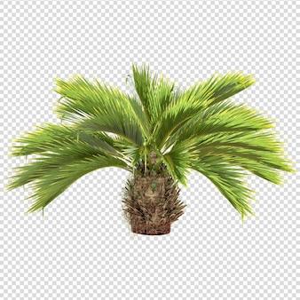 Palma isolata