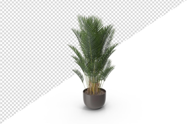 Palma sul vaso isolato