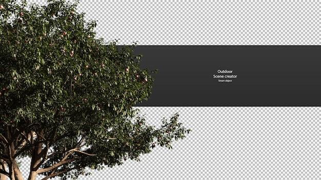 Percorso di ritaglio del ramo di pesco cima dell'albero isolata