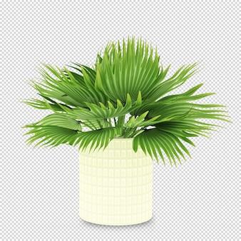 Pianta in vaso in 3d rendering isolato