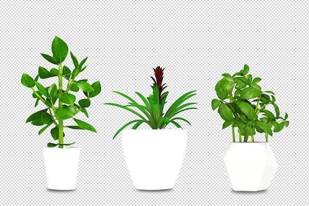 Piante in vaso in 3d rendering isolato Psd Premium