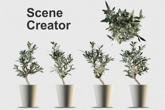 Piante in vaso nella rappresentazione 3d isolata