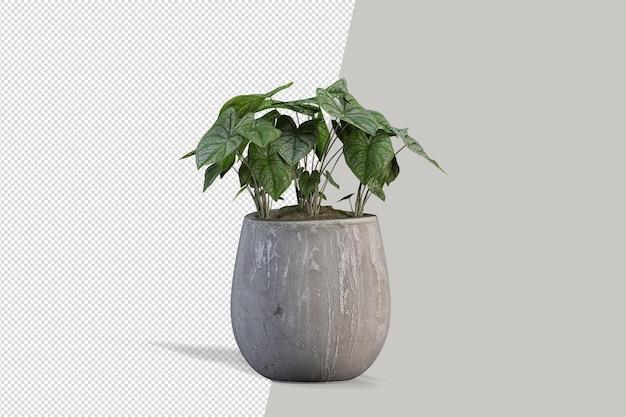 Piante in vaso nel rendering 3d isolato