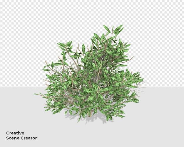 Pianta psd nella decorazione del creatore di scene di rendering