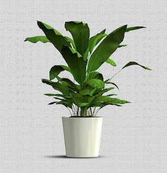 Rendering 3d realistico della pianta in vaso isolata