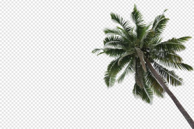 Primo piano realistico della palma da cocco isolato