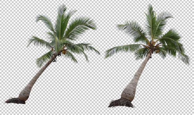 Insieme realistico della palma da cocco isolato