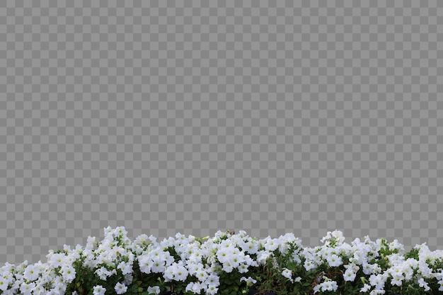 Primo piano realistico delle piante da fiore isolato