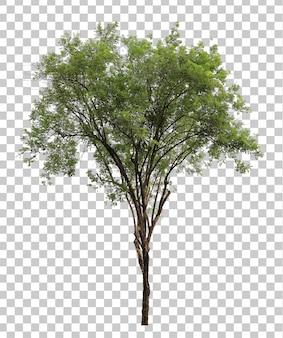Primo piano realistico dell'albero verde isolato