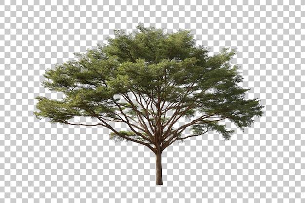 Albero verde realistico isolato