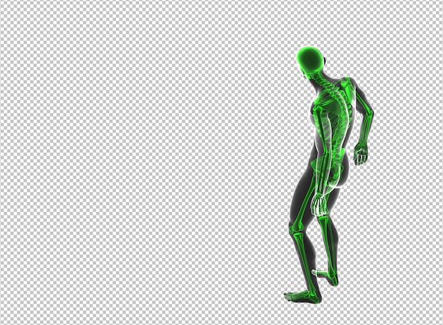 Vista posteriore dell'uomo maschio scheletro vagante