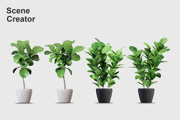 Rendering di piante isolate. vista frontale isometrica. parete trasparente
