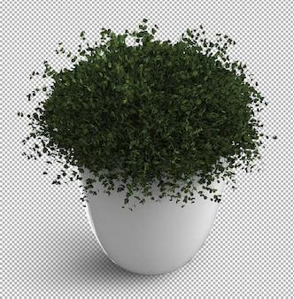 Renda della pianta isolata. vista isometrica. . 3d.