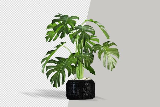 Rendering di piante isolate in vaso isolato