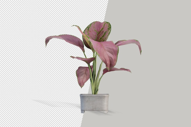 Rendering di pianta isolata isolated