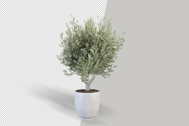 Rendering di piante isolate