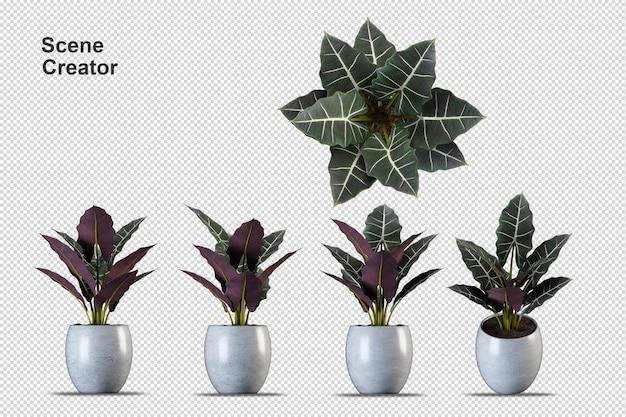 Rendering 3d di piante isolate