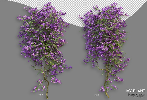 Rendering di varietà di disposizione di edera di stili